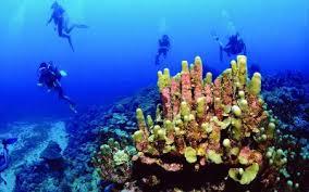 Plongée sous marine à l'ile maurice