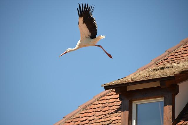 L'entretien d'un toit, un point important pour sa longévité